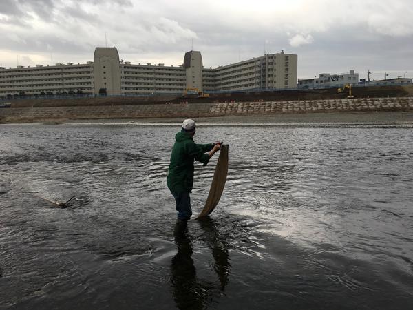 リネン布回収。多摩川の水の放射能調査。2018.1.17