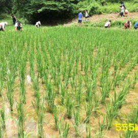 農に学ぶ。仲間と取り組む無農薬無肥料の米づくり